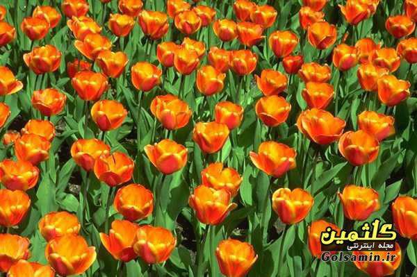 گالری عکس گل, flower pic