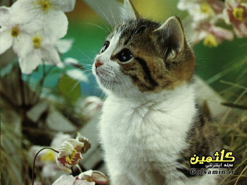 گالری عکس گربه, cat