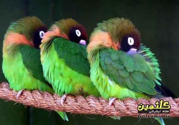 گالری عکس پرندگان, عکس پرنده