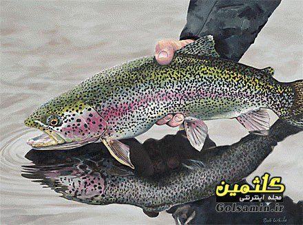 چند راه برای تشخیص ماهی تازه, راه شناخت ماهی منجمد