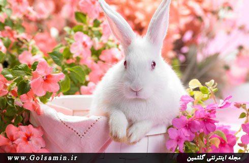 حیوانات در بهار, pic