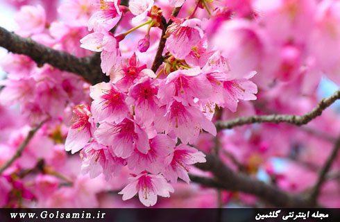 فصل بهار (1), pic