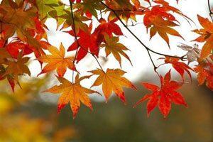 مزاج پاییز و زمستان و تدابیر آن, طبع و مزاج