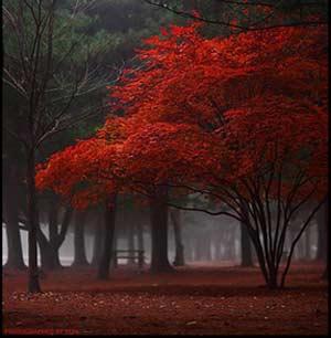 اشعار زیبای پاییزی, اشعار زیبای پاییز, پاییز در شعر, پاییز در شعر شاعران, شعر, شعر فروغ فرخ زاد در مورد پاییز, شعر و ترانه, شعر و ترانه ی پاییزی