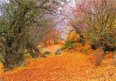 پاییز در«جنگل ابر» جلوهای زیبا ازطبیعت, pic