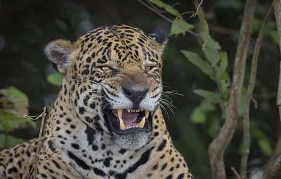 تصاویر زیبای حیات وحش, pic
