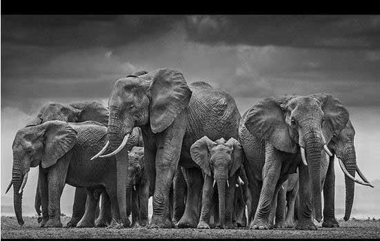 تماشای عکس های سیاه و سفید حیات وحش, pic