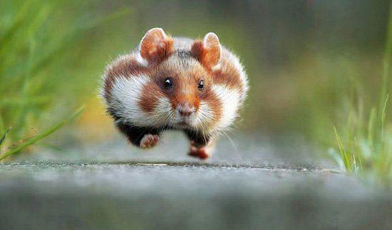 عکس های کمدی و خنده دار از حیات وحش, حیوانات