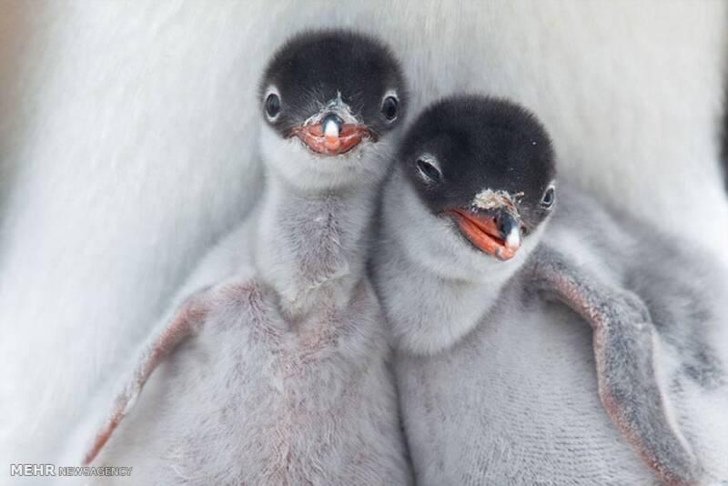 تصاویر مسابقه عکس حیات وحش نشنال جئوگرافیک, حیوانات