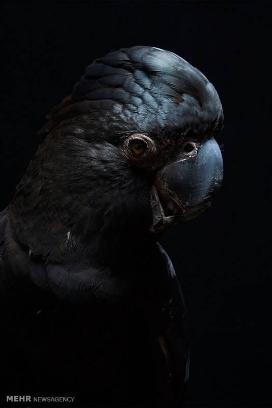 تصاویر پرتره پرندگان, حیوانات