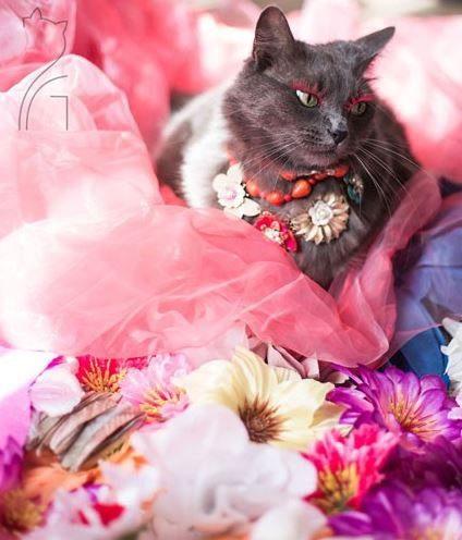 زندگی افسانه ای شیک ترین گربه جهان + تصاویر, حیوانات