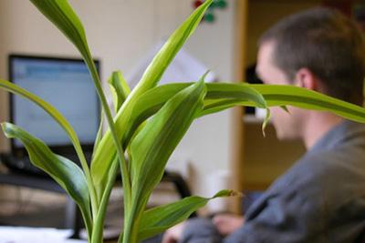آشنایی با گیاهان دفتر کار,گیاهان مناسب دفتر کار