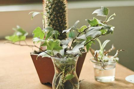 گیاهان مناسب دفتر کار, آشنایی با مناسب ترین گیاهان دفتر کار