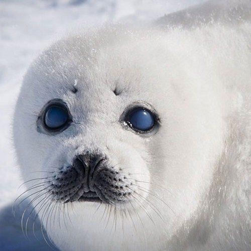 هیجان انگیزترین عکس ها از حیات وحش, حیوانات