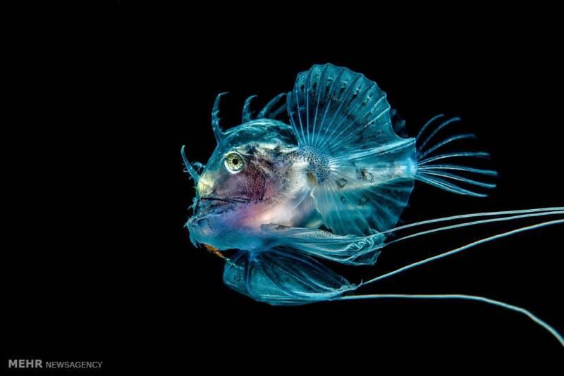 تصاویر مسابقه عکاسی از دنیای زیر آب, حیوانات
