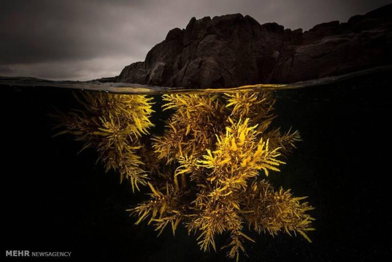 تصاویر عکاسی در زیر آب, حیوانات