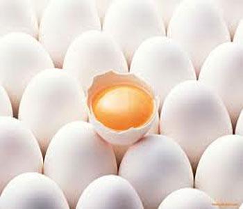 فواید تخم مرغ