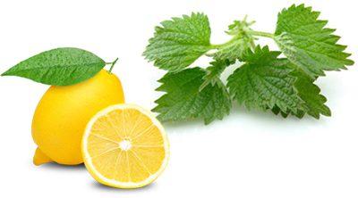 گزنه و لیموترش برای مقابله با کم خونی + روش تهیه, طب سنتی
