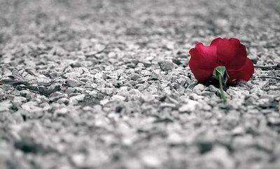 دلم در عاشقی زار اوفتادست (رشیدالدین وطواط), شعر