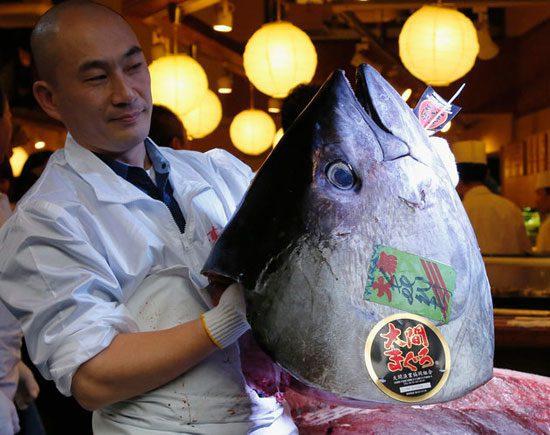 مردی ژاپنی یک ماهی تن را با قیمت عجیب 2 میلیارد تومان خریداری کرد, جالب