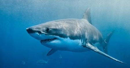 خطرناک ترین ماهی استرالیا,آشنایی با کشنده ترین مارهای استرالیا