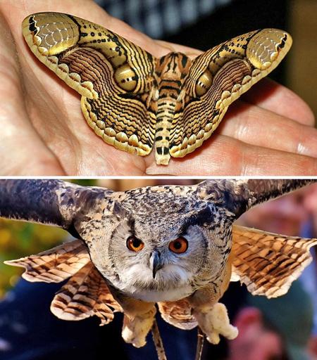 تصاویر عجیب ترین حشرات, انواع حشرات عجیب