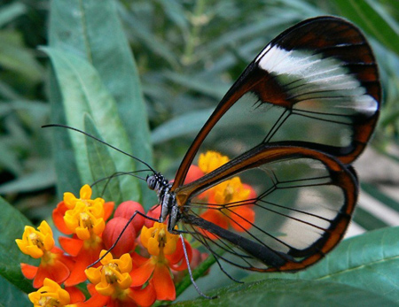 جالب ترین حشرات دنیا,حشرات جالب و زیبا