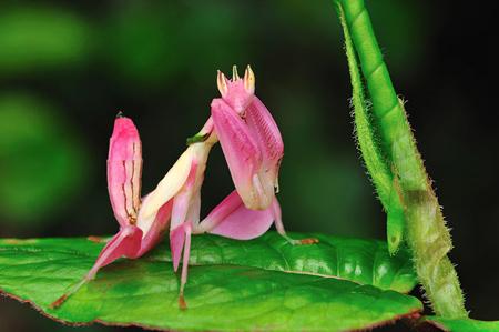 تصاویری از حشرات زیبا, تصاویری از جالب ترین حشرات دنیا