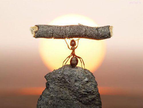 راه های تقویت اراده چیست؟, رازهای موفقیت