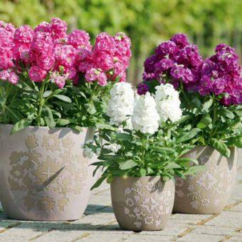 نکاتی درباره گل های بهاری