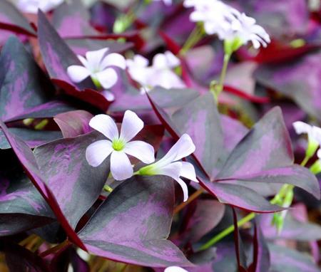 شیوه نگهداری از گل های آپارتمانی,آشنایی با انواع گل های آپارتمانی
