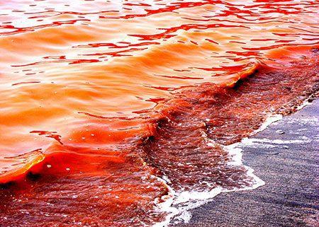 دریای سرخ, دریای سرخ شمالی,عکس های دریای سرخ