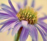 شناخت گیاهان فصلی، این گلهای تابستانی