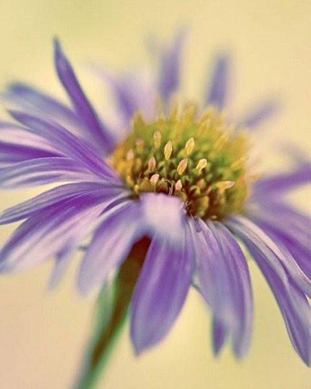 شناخت گیاهان فصلی، این گلهای تابستانی, دانستنیهای گیاهان و حیوانات