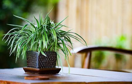 آبیاری گیاهان کم آب, نگهداری از گیاه لاستیکی