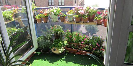 درختچه ها و گل های مخصوص تراس و بالکن, دانستنیهای گیاهان و حیوانات
