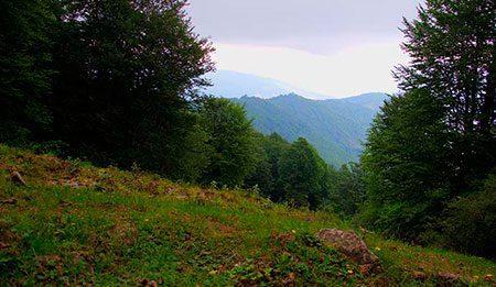 جنگل ارفع ده و چشمه پراُو در استان مازندران, به کجا سفر کنیم, توریسم, راهنمای گردشگری, سفر, گردش, گردشگری, مسافرت, مکان های توریستی, مکان های گردشگری