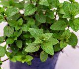 گیاهان خانگی برای درمان استرس