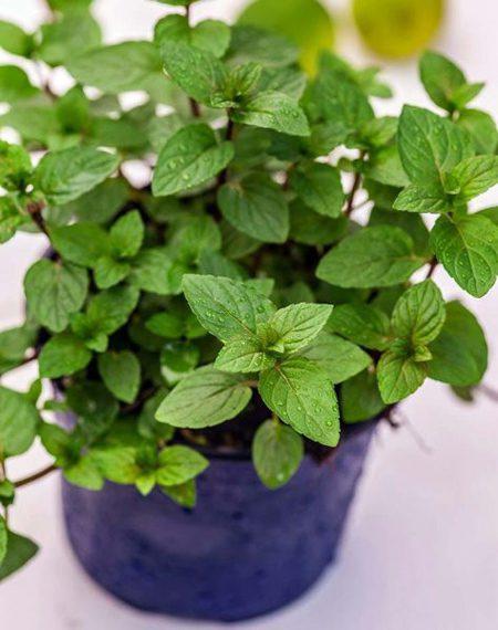 نحوه درمان استرس, درمان استرس با گیاهان