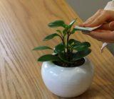 راهنمای تمیز کردن گیاهان آپارتمانی