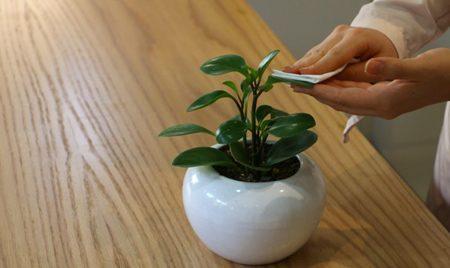 راهنمای تمیز کردن گیاهان آپارتمانی, دانستنیهای گیاهان و حیوانات