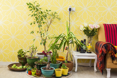 نکته هایی برای نگه داری گیاهان در فصل پاییز و زمستان, دانستنیهای گیاهان و حیوانات