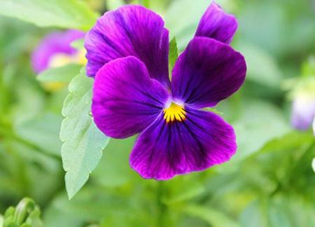 کاشت گل های مناسب در پاییز,نکاتی برای کاشت گیاهان