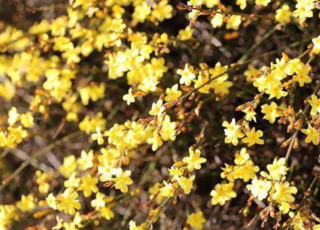گل های بهاری که باید در فصل پاییز کاشته شود, حیات وحش