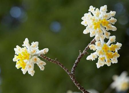 آشنایی با زمان و نحوه کاشت گل ها, کاشت گل های مناسب در پاییز