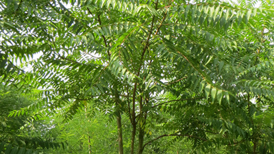 آشنایی با درخت عرعر, حیات وحش