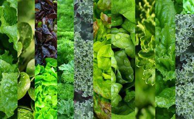 سبزهای مفید و پر خاصیت برای بدن !, تغذیه, رژیم