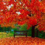 شعر پادشاه فصل ها پاییز - مهدی اخوان ثالث