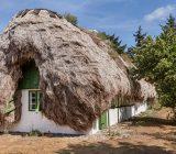 خانه هایی جالب با سقفی از جلبک (+تصاویر)