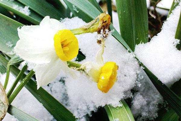 گلهای مناسب کاشت در فصل زمستان